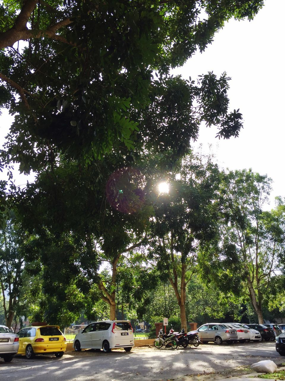 tree, car, transportation, land vehicle, mode of transport, day, outdoors, road, growth, sunlight, stationary, nature, branch, no people, sky