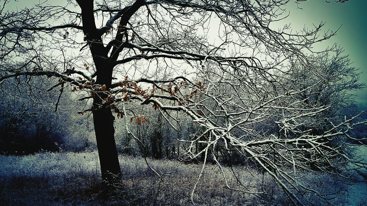 tree, bare tree, branch, tranquility, nature, beauty in nature, no people, day, outdoors, landscape, scenics, tree trunk, sky