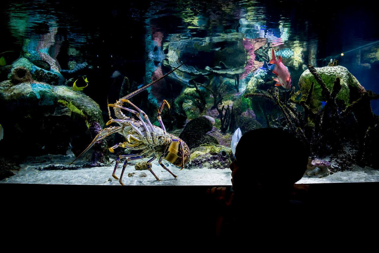 Aquarium Aquarium Life Childhood Colors Fish Nature Silhouette Water