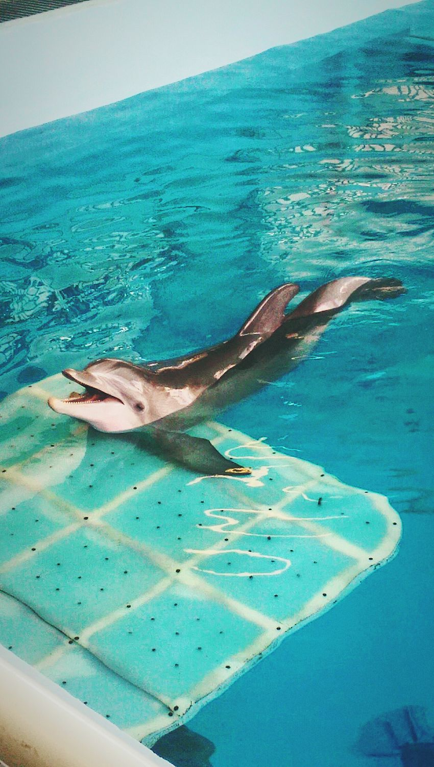 Water Animals In The Wild Sea Life Dolphin Dolphins Dolphindiscovery Dolphin Show  Dolphin Fun Dolphin In Water Dolphin Show  Dolphin Watching  Dolphin