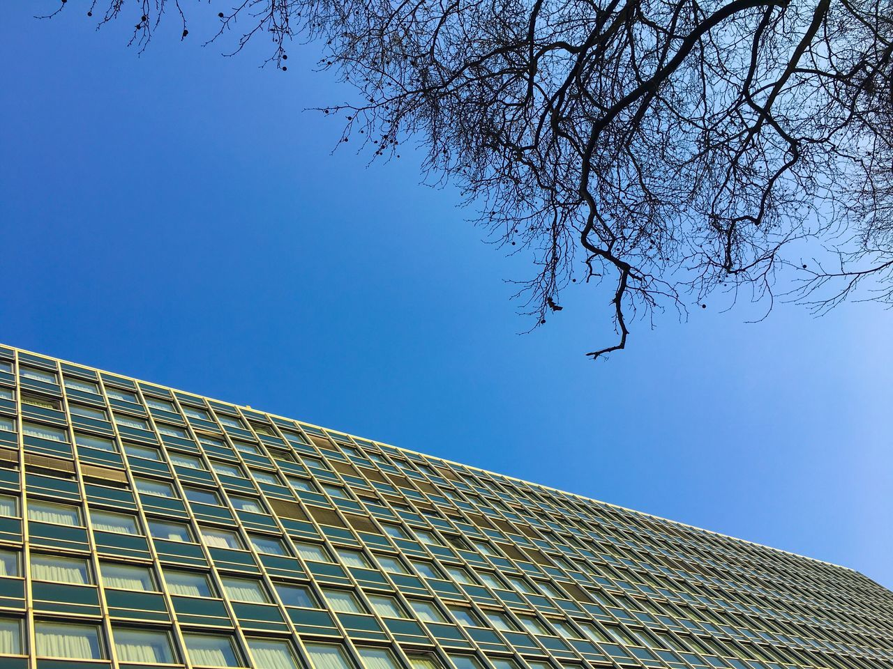 Building Exterior Built Structure Architecture Clear Sky Low Angle View Blue No People Tree Day Outdoors City Sky Pattern, Texture, Shape And Form Exceptional Photographs Eyeem Market Getting Inspired