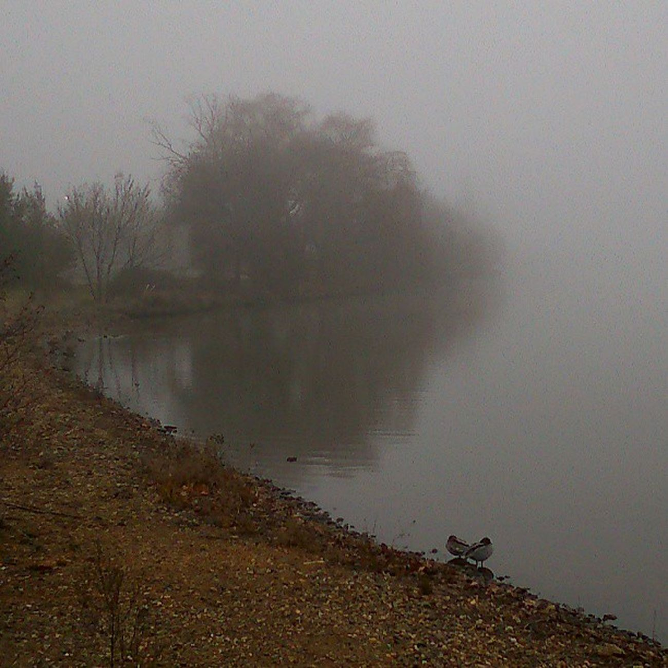 Visiting my favourite Misty Ducky  Couple again this morning...