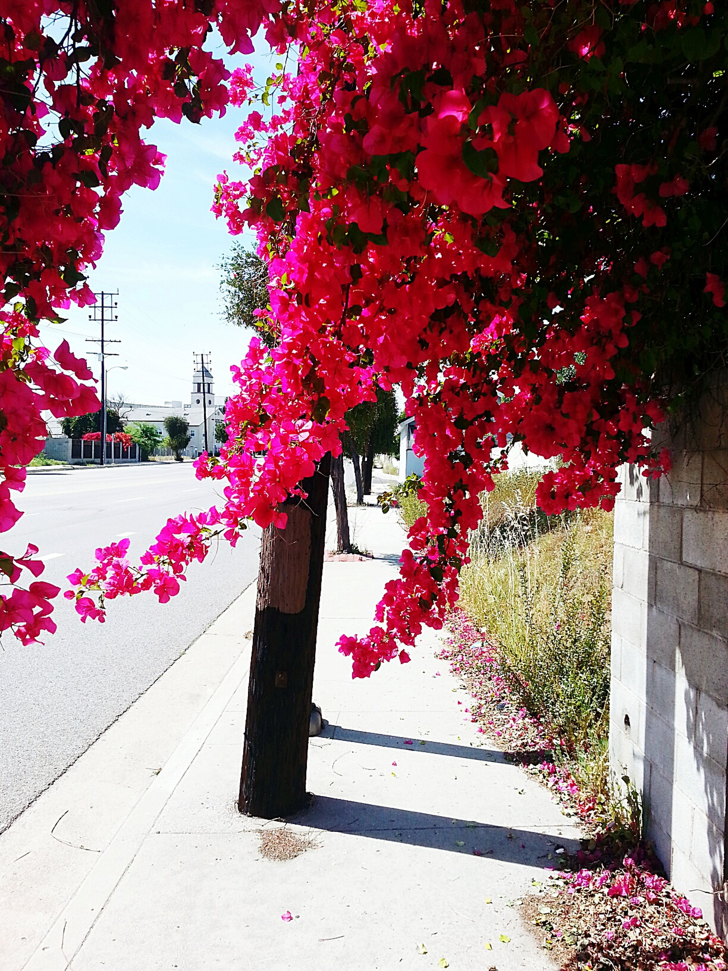 tree, flower, growth, pink color, branch, nature, building exterior, red, freshness, built structure, architecture, plant, beauty in nature, leaf, sunlight, park - man made space, outdoors, season, blossom, day