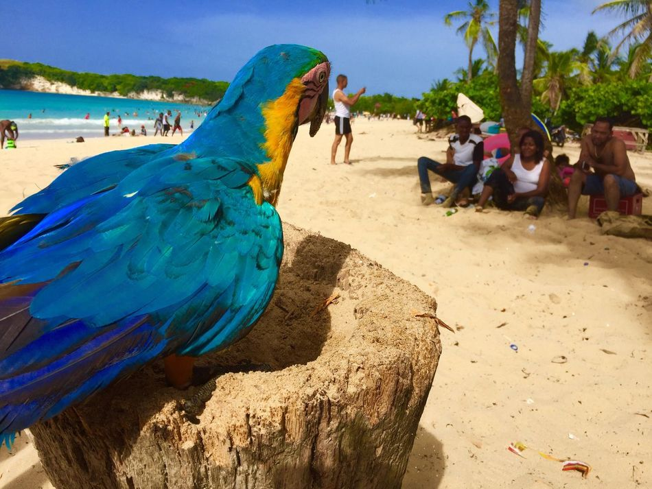 Beach One Animal Dominican Republic