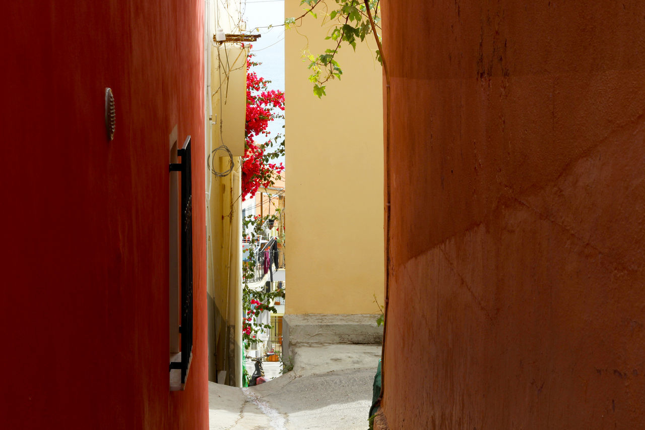 Alley Alleyway Architecture Building Greece Greek Islands Idyllic Lesbos Lesvos Mediterranean  Orange Orange Color Plomari, Greece Red Flower Red Flowers See Through Village Village Life Village View Yellow