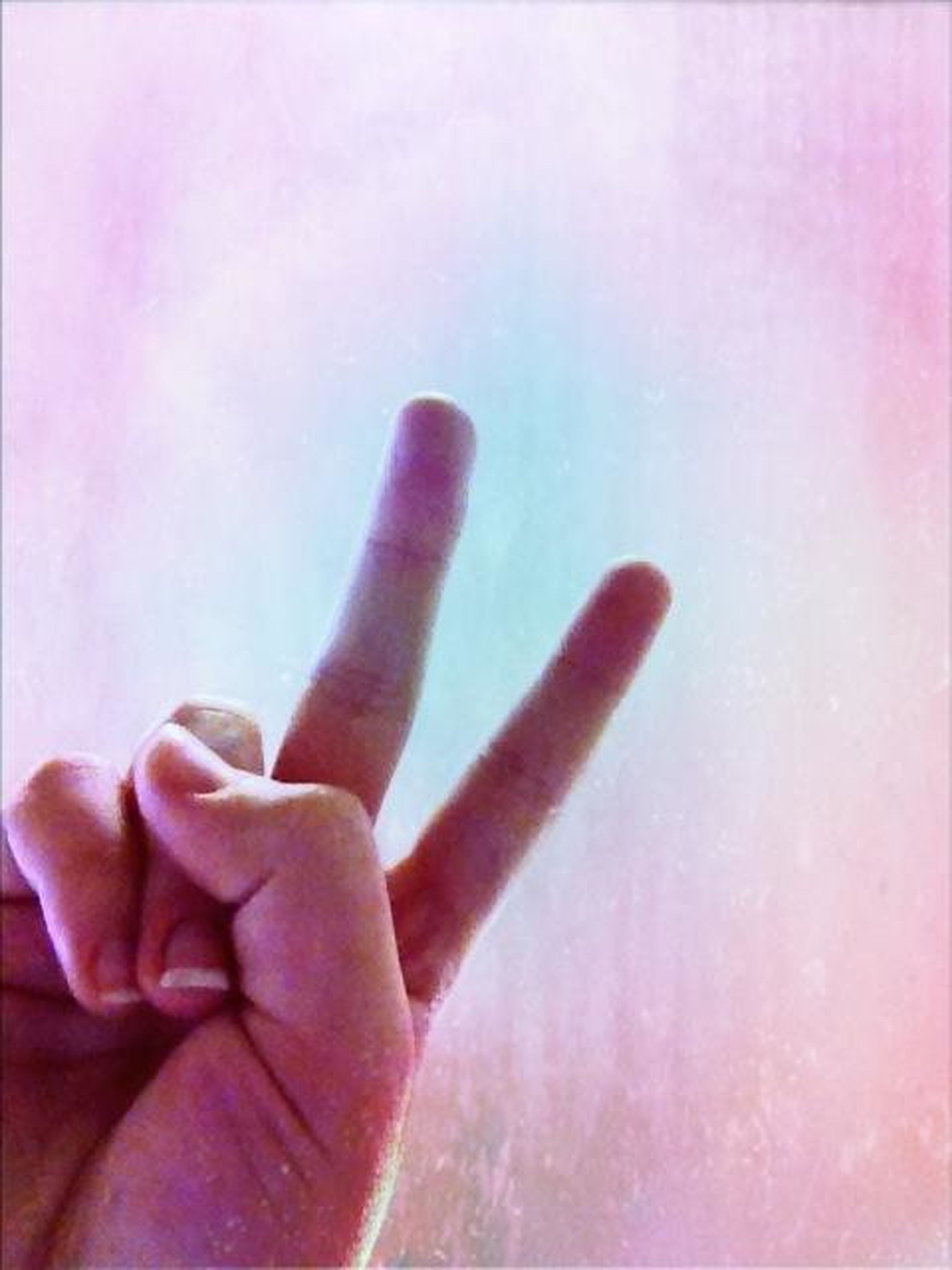 person, part of, human finger, cropped, indoors, holding, lifestyles, close-up, unrecognizable person, flower, pink color, fragility, personal perspective, copy space, touching, wall - building feature