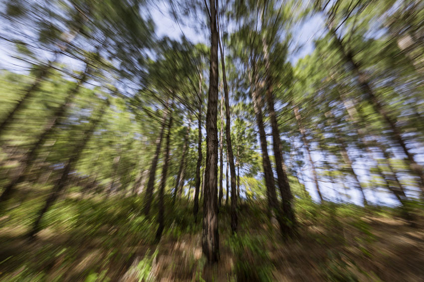 A daytime slow shutter zoom burst. Abstract Photography Creative Photography Creativity Zoom Burst Abstract Abstractart Beauty In Nature Burst Canon Photography Day Low Angle View Nature Outdoors Tree