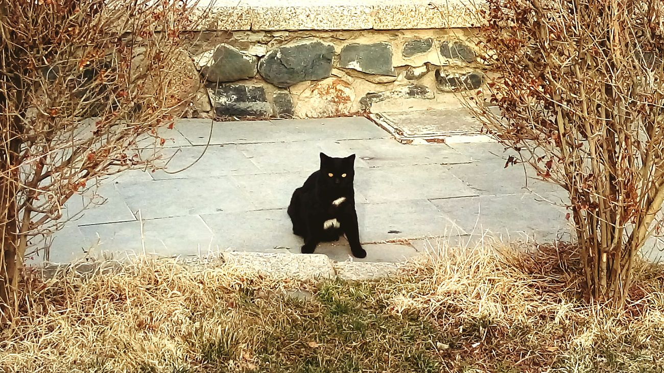 Black cat photo posture.... in Hamedan Iran Cat Black Cat Posture Photo Posture Beauty Animals Animal Look
