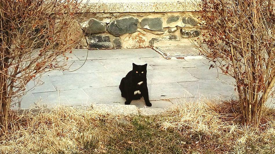 Black cat photo posture.... in Hamedan Iran Cat Black Cat Posture Photo Posture Beauty Animals Animal Look