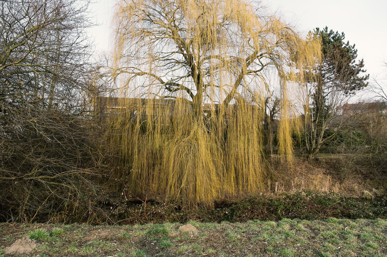 Trauerweide Bare Tree Day Grass Growth Haystack Nature No People Outdoors Sky Spring Springtime Tranquility Trauerweide Tree Weeping Willow