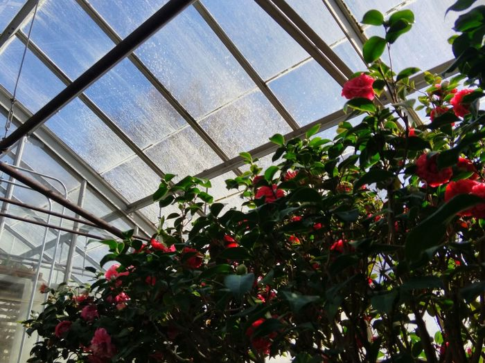 Plants And Flowers Sky Light