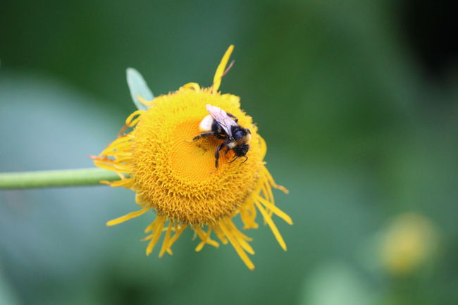 EyeEm Nature Lover Nature_collection Nature Flower Collection Flower Bee Natures Diversities