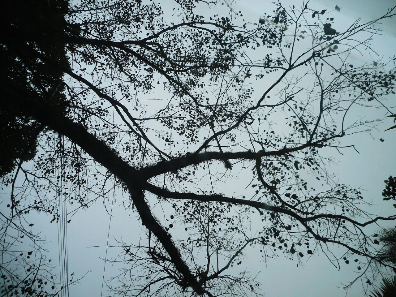 Sad Winter Trees Clouds And Sky Camera Up Lonely Nature_collection Emptiness Nature Textures Window View From Car Window