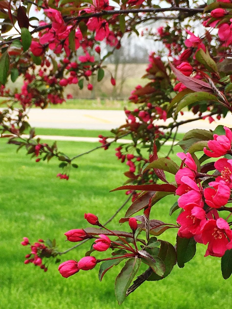 Spring is making the dead trees bloom. Beauty In Nature Flower