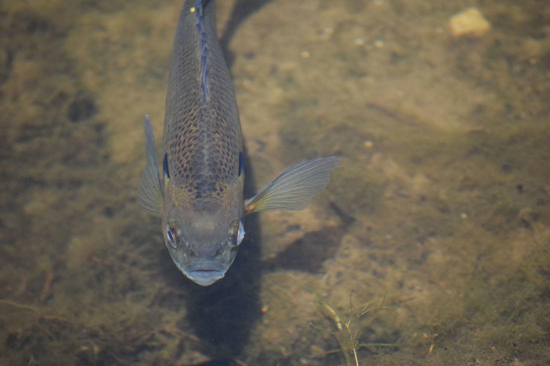 Close-up Fish Nature Underwater What Lies Beneath
