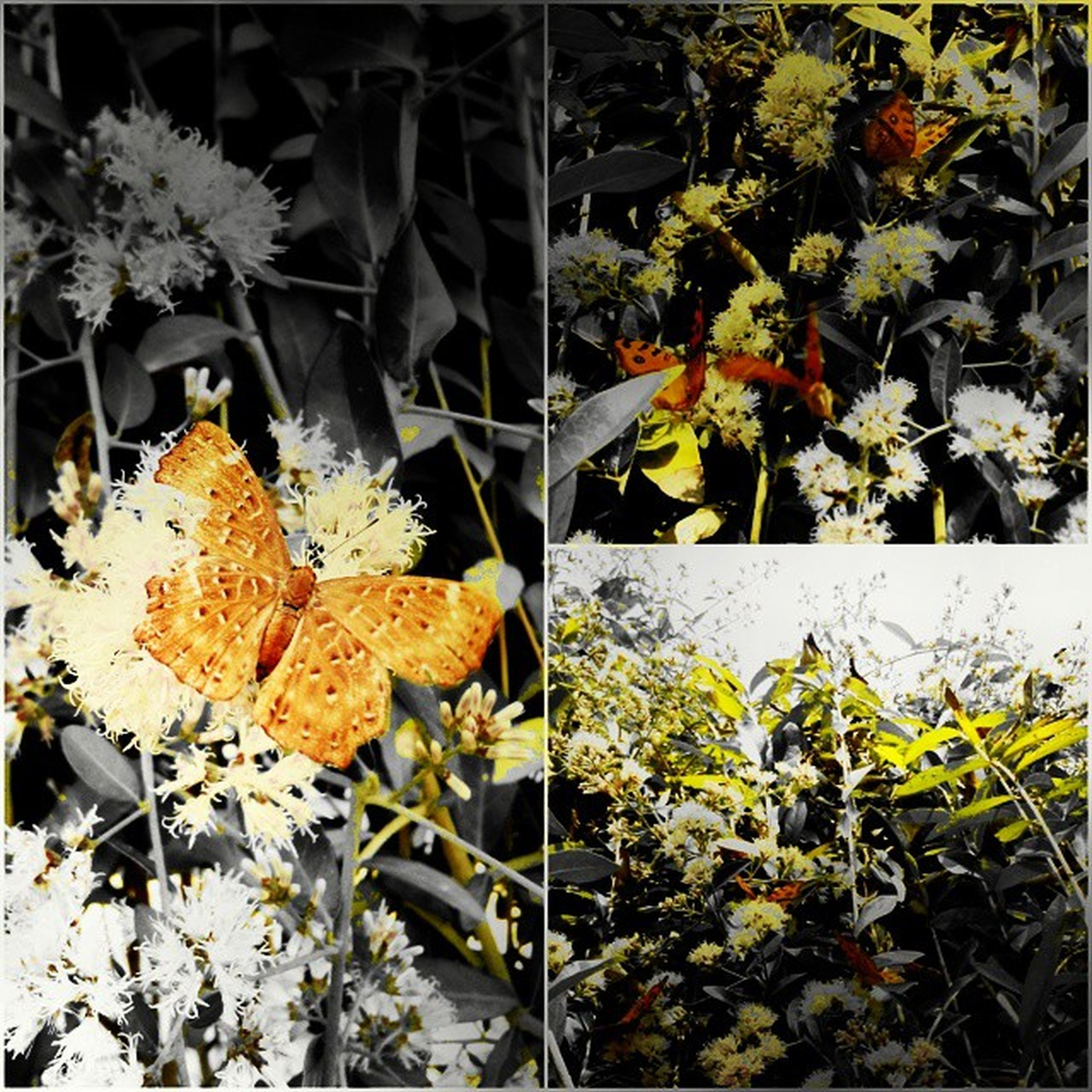 plant, leaf, growth, flower, fragility, nature, season, yellow, beauty in nature, autumn, freshness, change, outdoors, day, close-up, sunlight, blooming, dry, fence, front or back yard