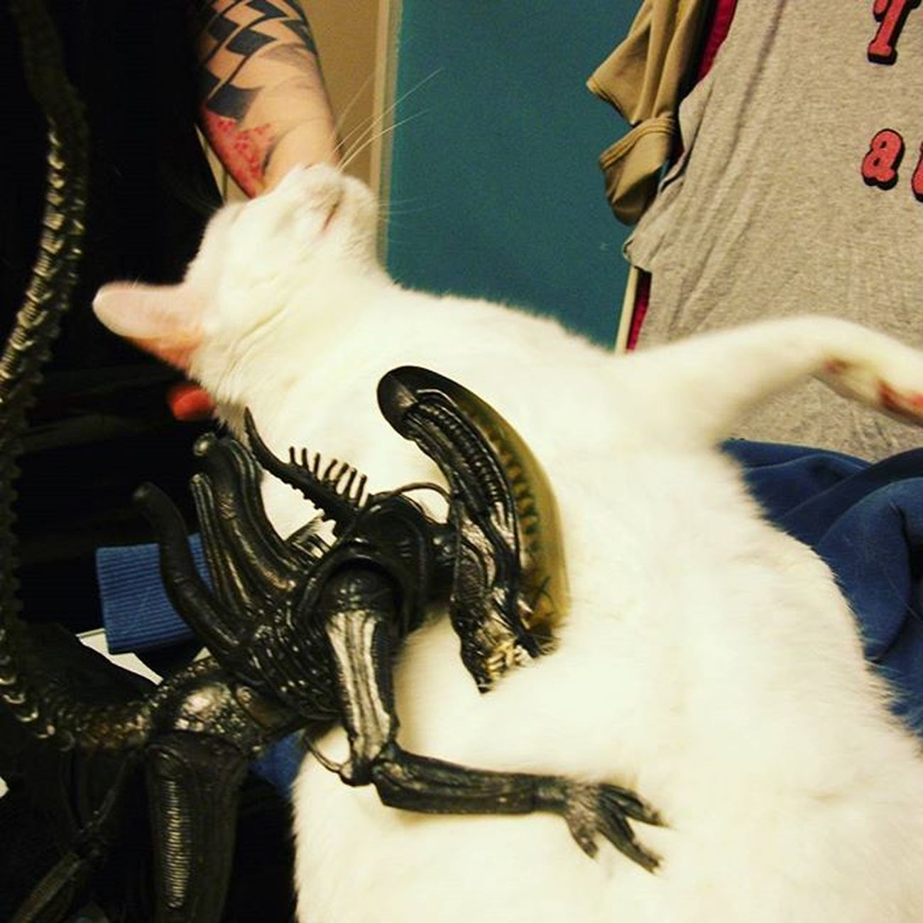 Despite his scary outward appearance Geoff really loves soft fluffy kittens. Toptoyphotos Toydiscovery Toyphotography Xenomorph Catsofinstagram Jinx Geoffthexenomorph Figpics