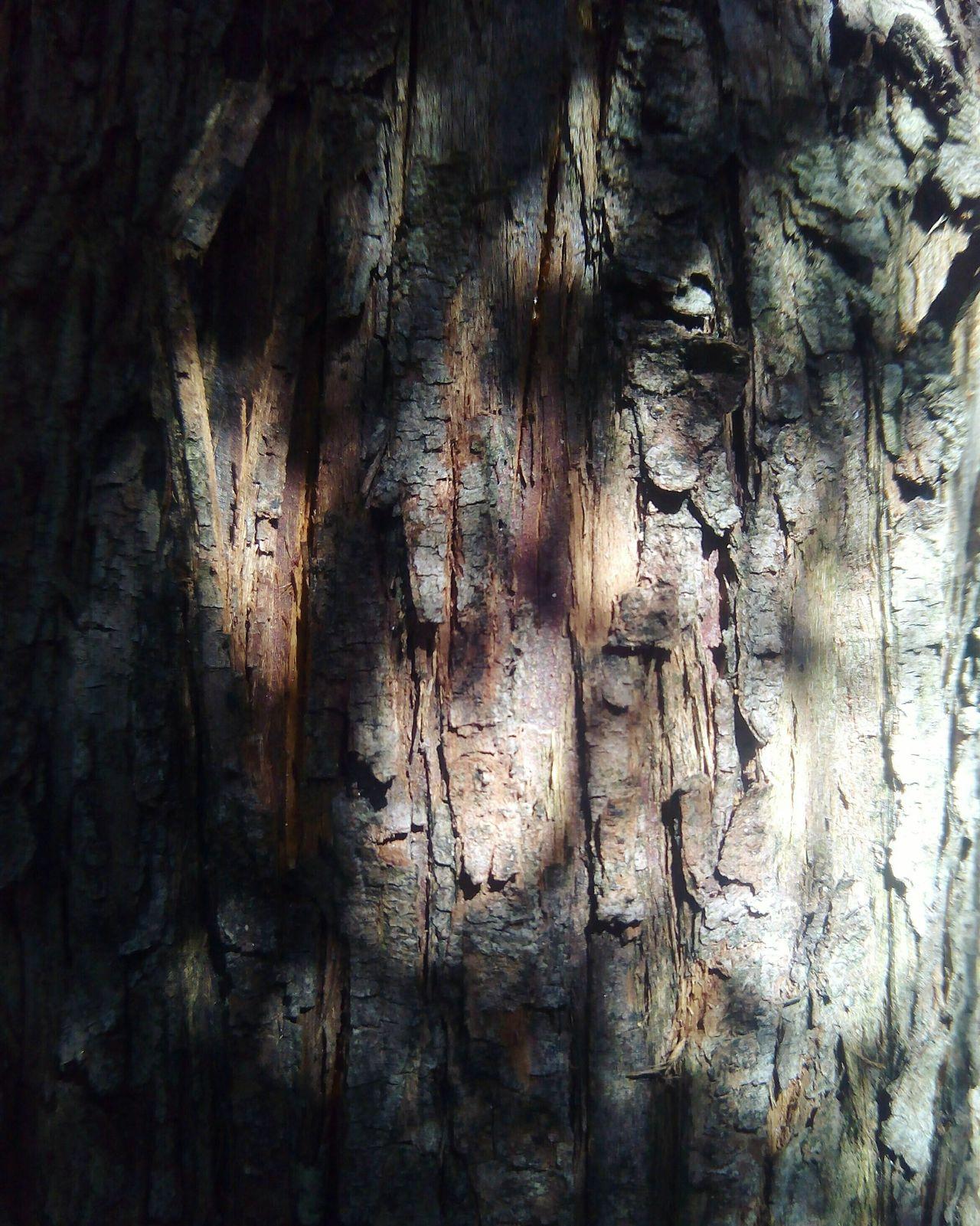 Tree Shadow Textured  Nature Tronco árbol Textura Sombras Naturaleza