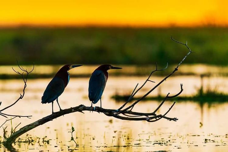 Nature Photography Fotography Photo Foto Camaras Fotografia Mundo Fotonatural First Eyeem Photo Nature Zoology Orange Color Beauty In Nature Animal Themes Aves Bird Animal Themes Animals In The Wild Wildlife Focus On Foreground Water Perching Nature Lake Tranquility