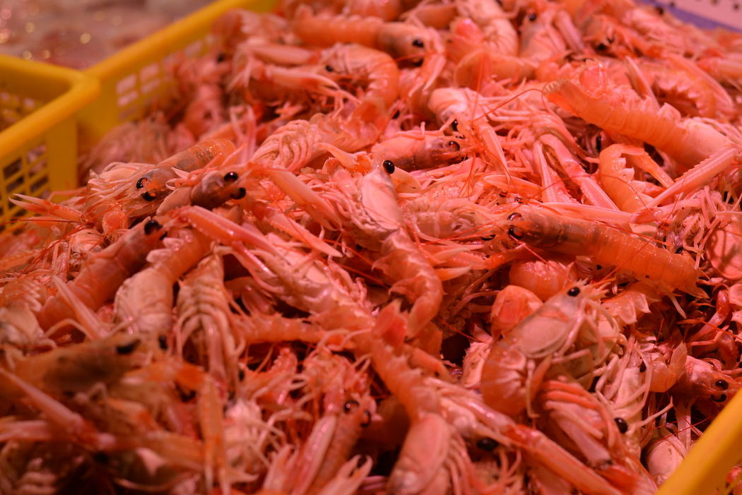 Abundance Animal Themes Close-up Day Food Food And Drink Food And Drink For Sale Freshness Healthy Eating Indoors  Krustentiere Langustine Large Group Of Objects Lobster Market No People Norwegian Lobster Prawn Retail  Sea Food Seafood Seafood Shrimp