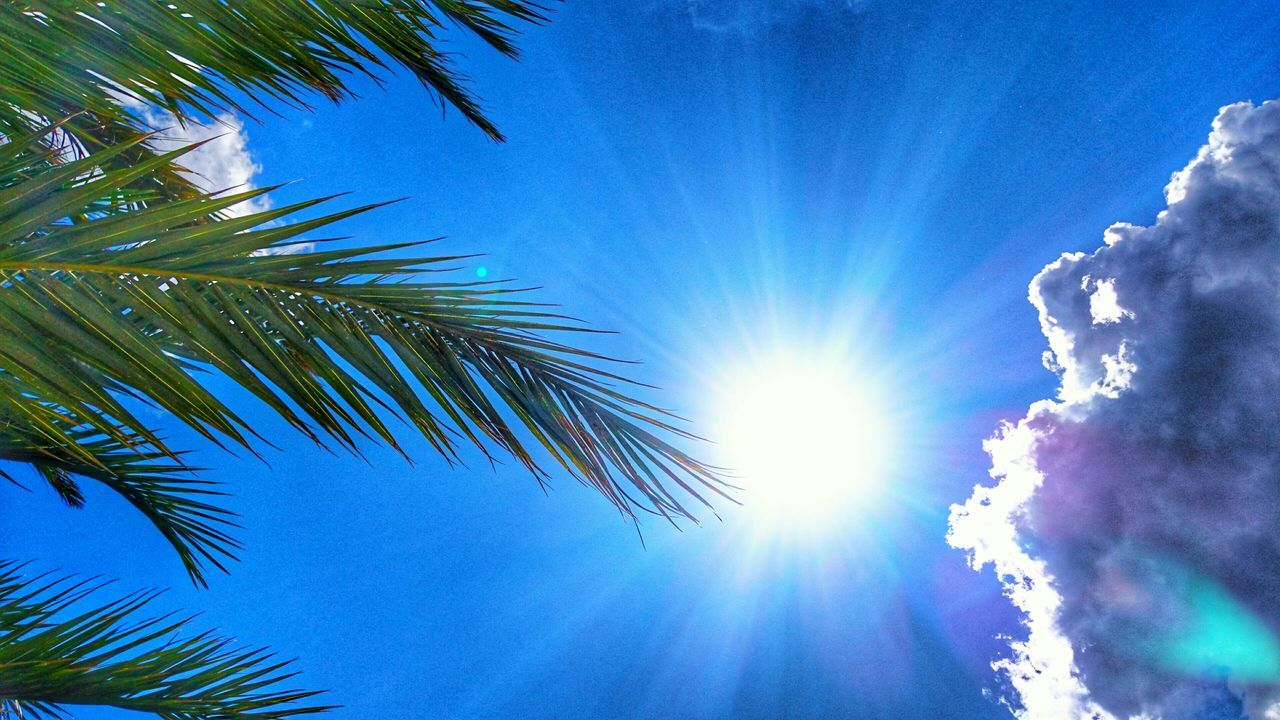 Holiday Vacation Time Enjoying The Sun Sony Xperia Z3+ Soakingupthesun Clouds And Sky Palm Tree