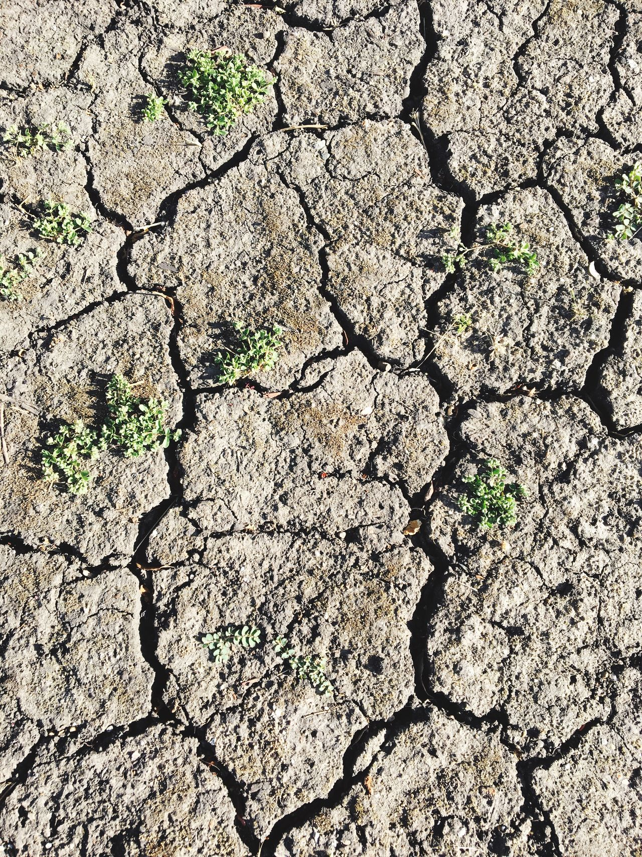 Cracked Drought Arid Climate Environmental Issues Land Textured  Environment Mud Full Frame Dry Backgrounds Barren Day No People Bad Condition Global Warming High Angle View Nature Outdoors Close-up