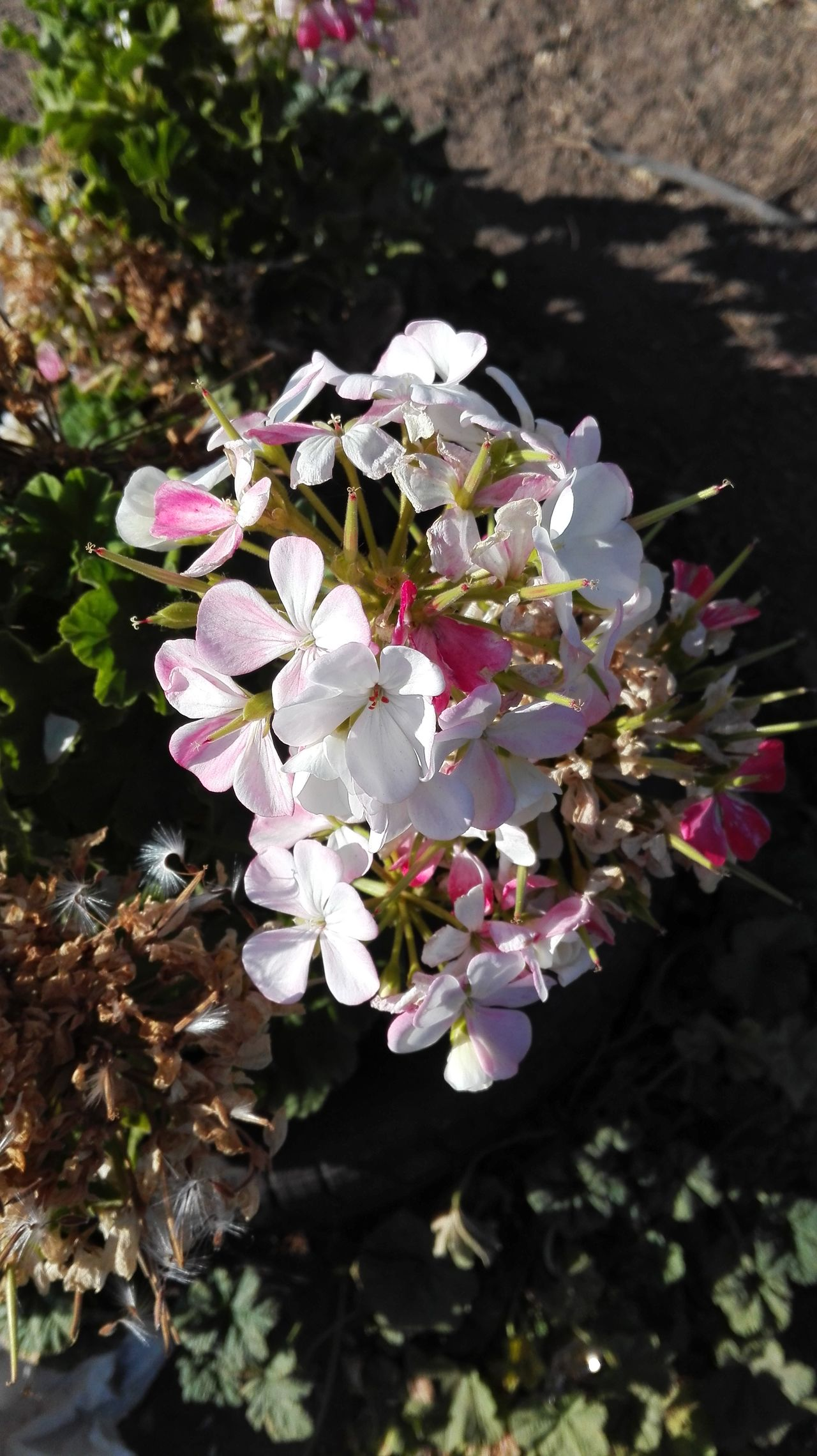 Beautiful Flowers pink EyeEmNewHere Millennial Pink