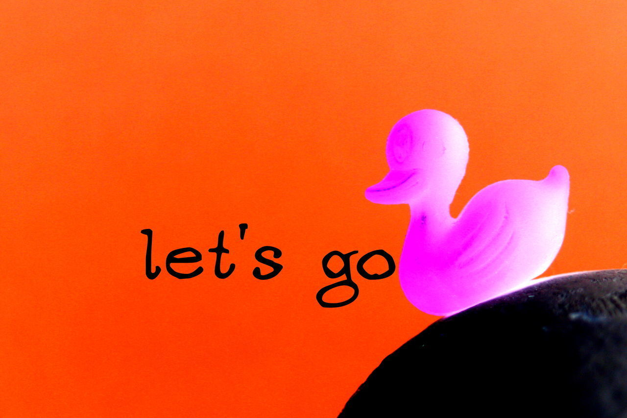 Chilhood Close-up Colors Communication Day Duck Human Hand Ilustration Indoors  Orange People Picture Studio Shot Text