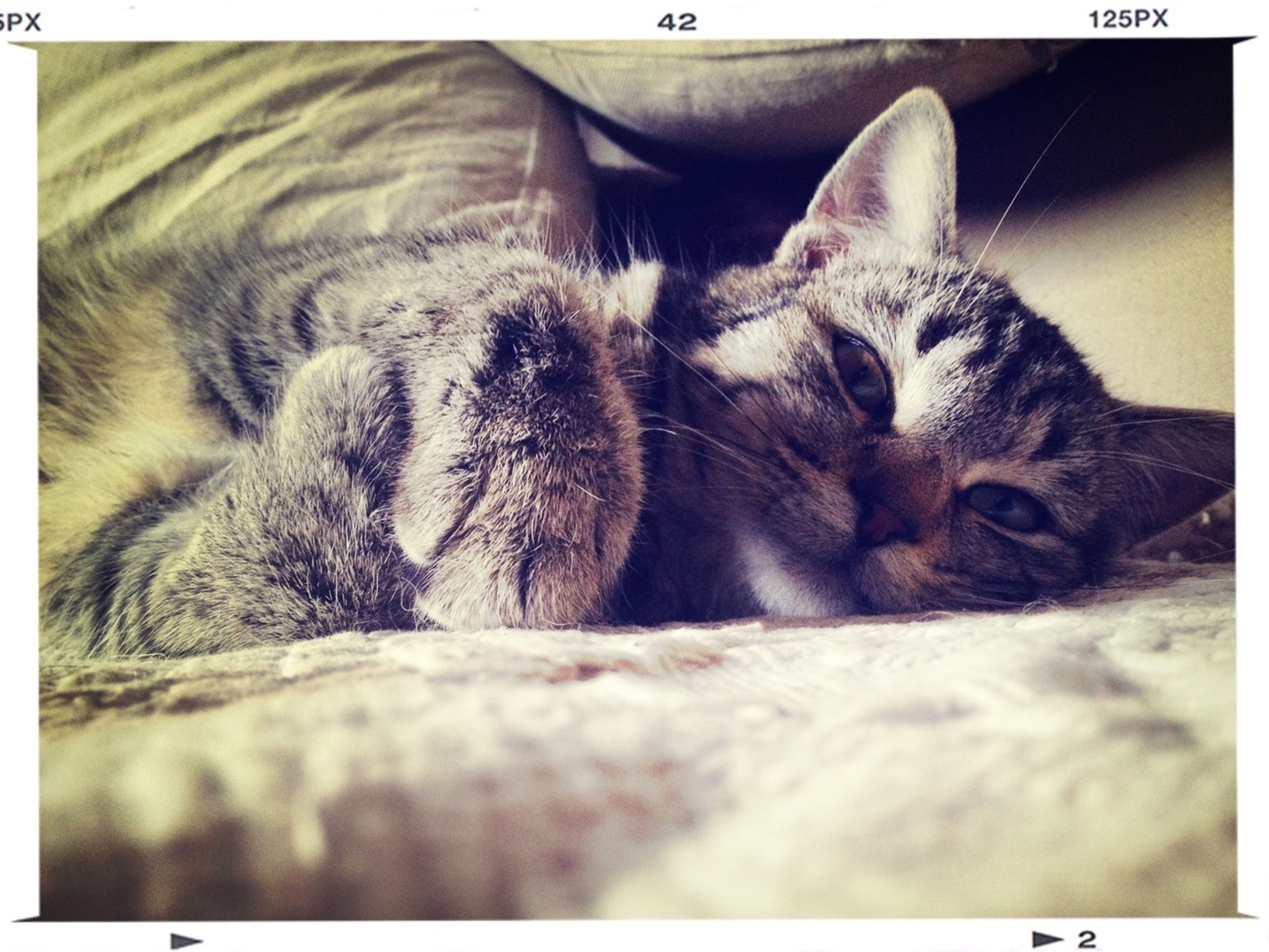 animal themes, pets, domestic cat, domestic animals, one animal, mammal, cat, transfer print, feline, relaxation, indoors, resting, lying down, sleeping, auto post production filter, whisker, close-up, animal head, eyes closed, animal