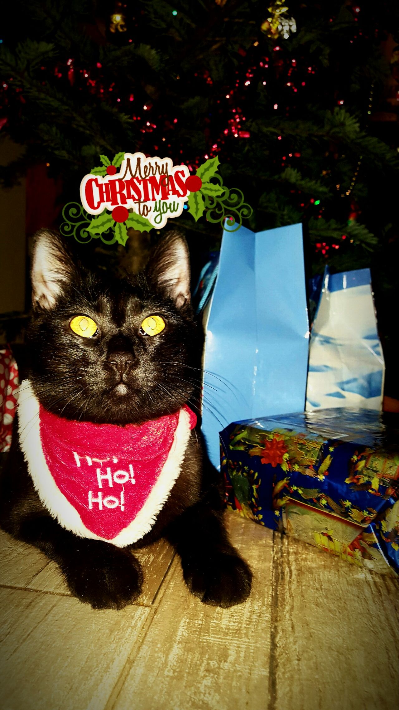 Handmade For You MrFranky Christmas Tradition Celebration Close-up Indoors  Christmas Tree Cat Black Cat Ho Ho Ho ! Golden Red Tree Christmas Decoration Happy Holidays! Feline Pets Looking At Camera Multi Colored Snow Sports