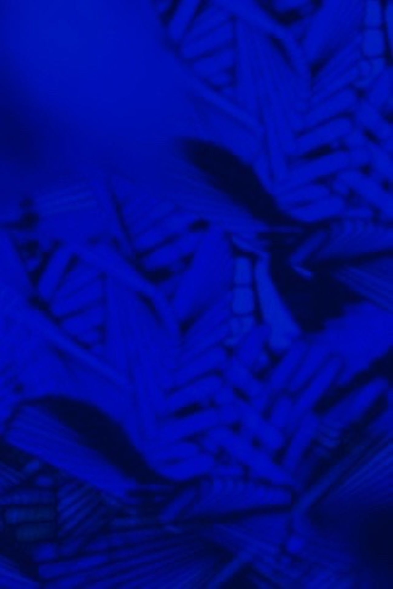 Cobalt Blue By Motorola