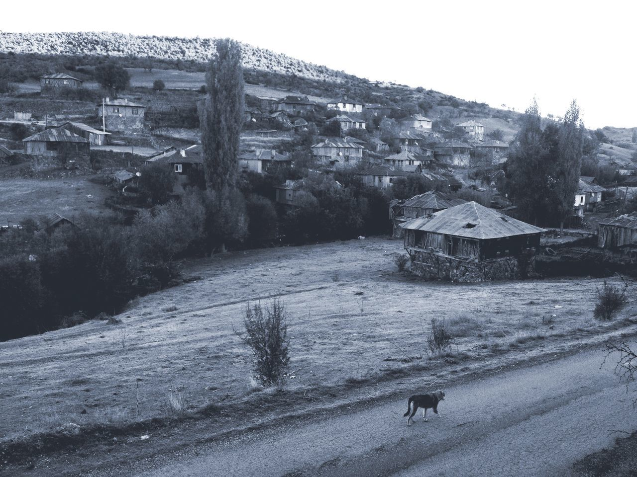 Cold in Village of Geriş EyeEmTurkey . EyeEm Best Shots - Autumn / Fall Autumn Landscape EyeEm Best Shots - Landscape Blackandwhite Black And White Rural Landscape Rural Village Life