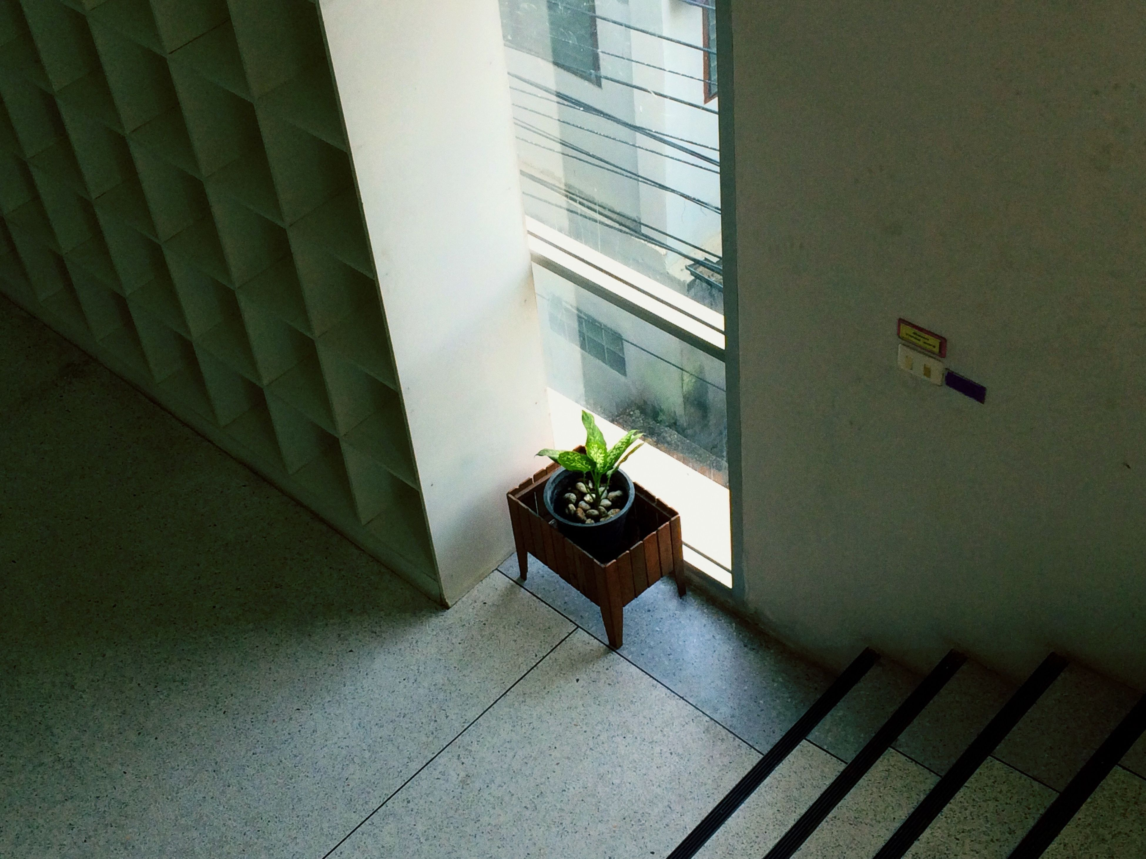 architecture, built structure, building exterior, potted plant, plant, window, leaf, wall - building feature, growth, indoors, wall, building, sunlight, tiled floor, green color, day, no people, house, shadow, flower pot