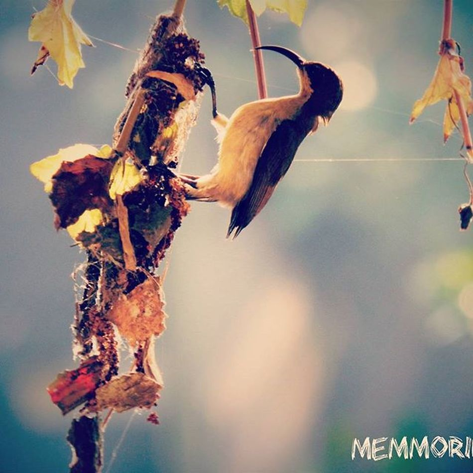 Earlymorningclick Bird Memmoriezzphotography Newclick Home India Kerala Kottayam