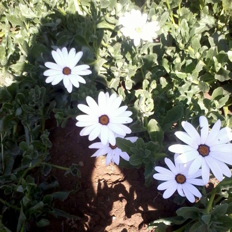 Galaxyy Samsung ClassX 10 Classtrip Flowers Instagram Fb Irfan InstaIrfan Shadow GNHSS White Sunshine Memories School Ranchi Friends 2011