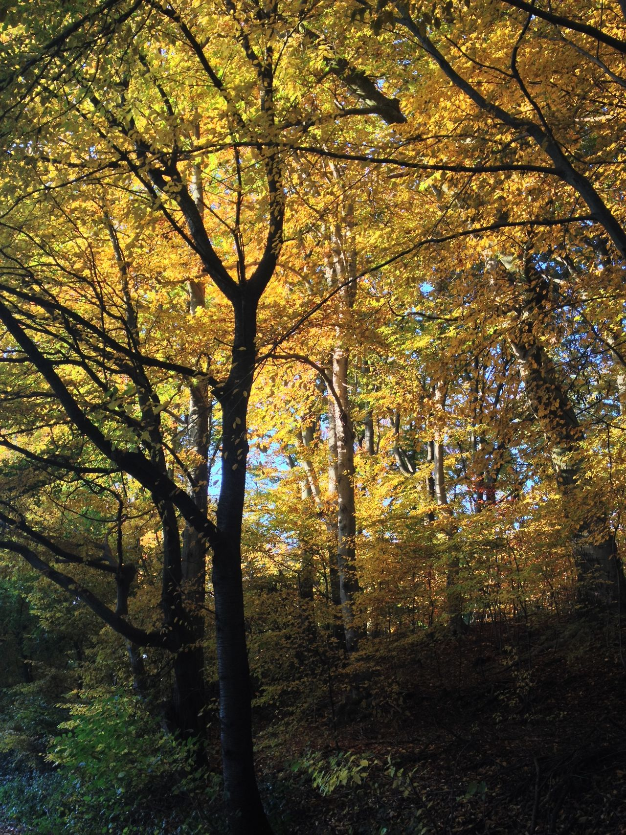 Autumn Beauty In Nature Branch Forest Forest Photography Golden Autumn Green Green Color Growth Nature Season  Solitude Tree Tree Lover Tree Trunk WoodLand