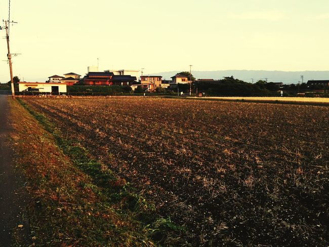It is about time the rice fields of the season!