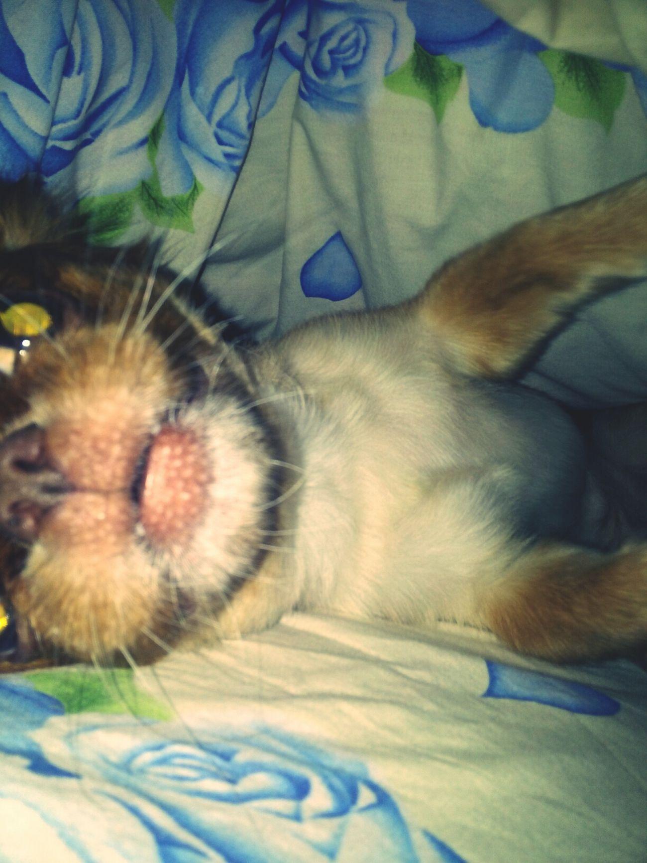крыс:D Dog