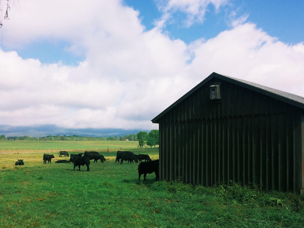 Beautiful stock photos of farm, Animal Themes, Architecture, Barn, Building Exterior