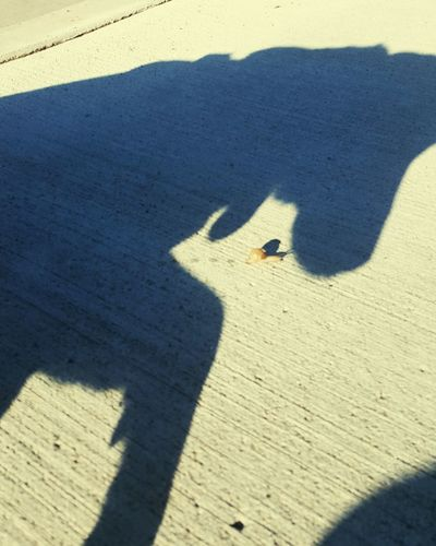 Shadow No People Giant Dog Tiny Snail Outdoors Day Sunlight Look Out!!
