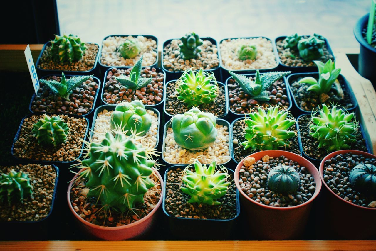 Growth Plant Green Color Close-up Cactus Flower Shop Decoration Decor Interior Design Fresh Relax