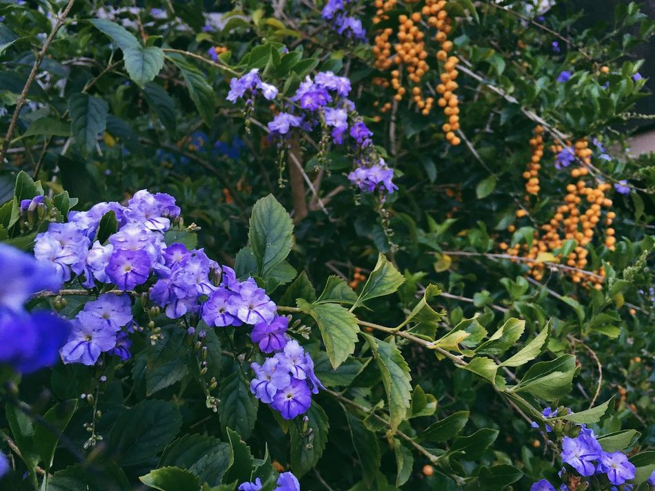 Summer lush Beauty In Nature Flower Purple Growth Blooming