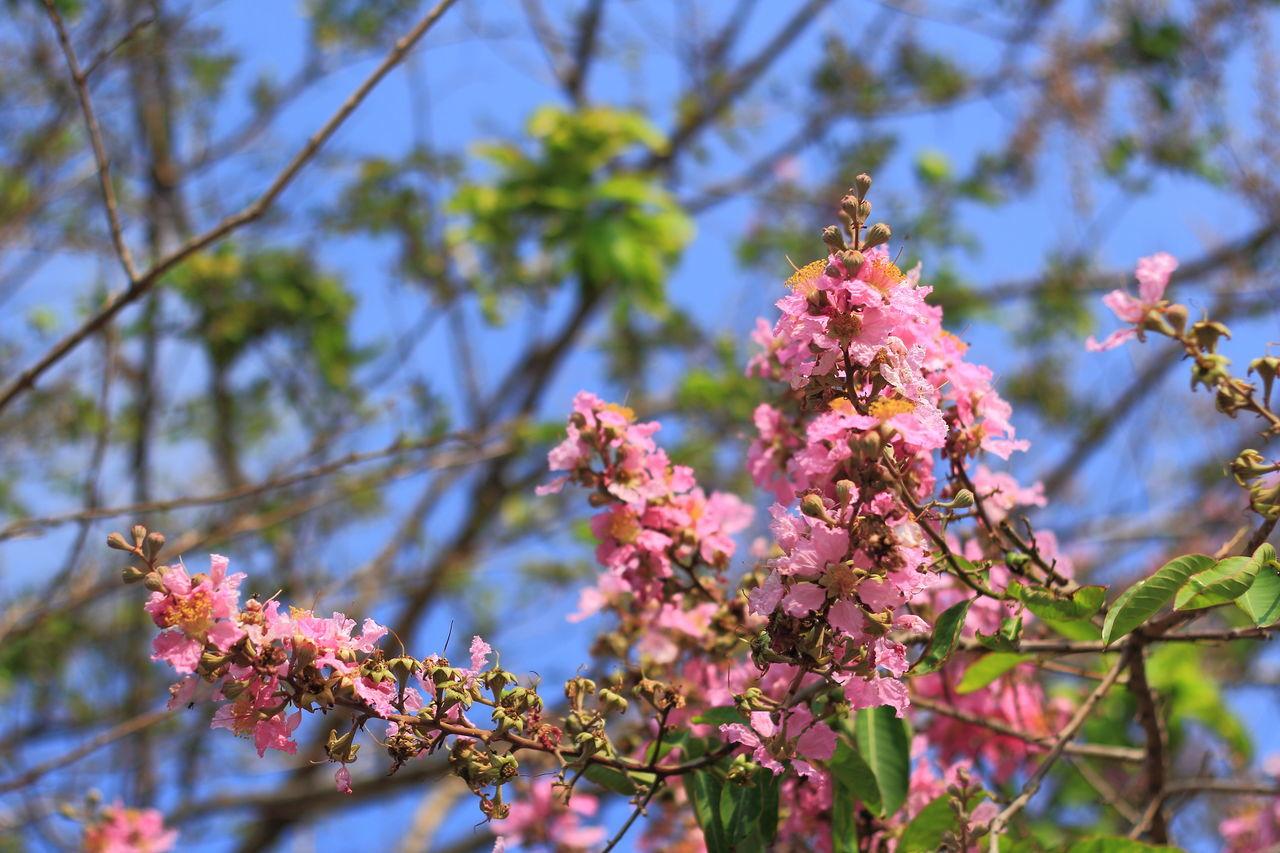 Pink Flower at Morning First Eyeem Photo