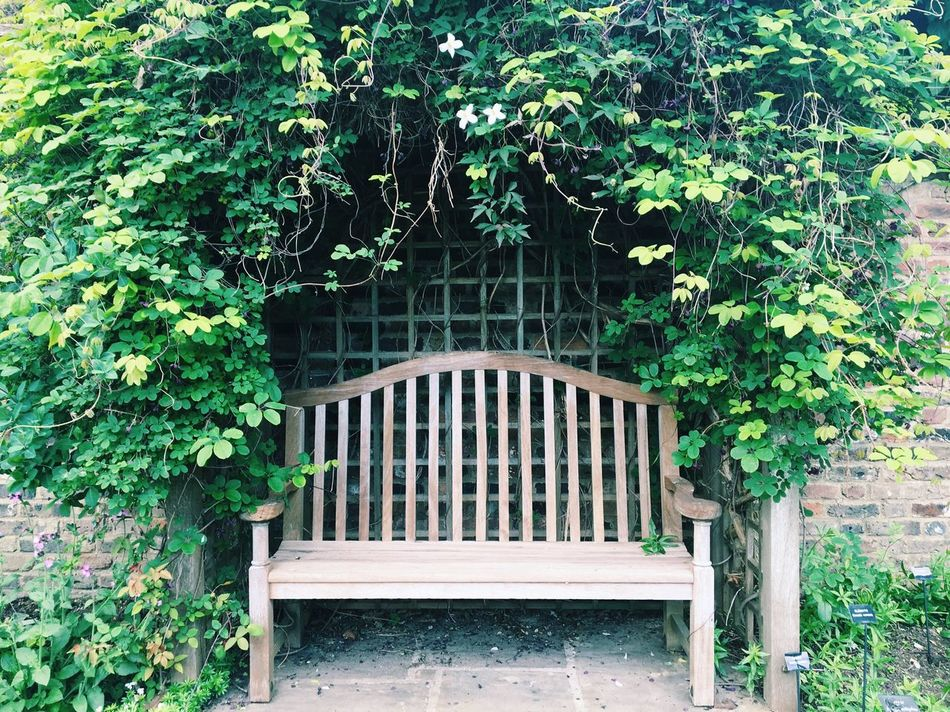 Romance is (not) dead Green Color Growth No People Bench City City Life Nature Springtime Nature Photography Beauty In Nature Outdoors Spring Serenity Tranquility Leaves Romance Romantic Corners Hidden Gems  Cityexplorer