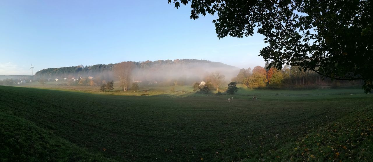 Agriculture Field Crop  Rural Scene Tree Outdoors Nature Beauty In Nature Growth Landscape Fog Day No People Freshness Sky Foggy Morning Veldrom Feldrom Velmerstot Horn-Bad Meinberg Foggy Weather Panorama Panoramic Photography Autumn Silberbachtal