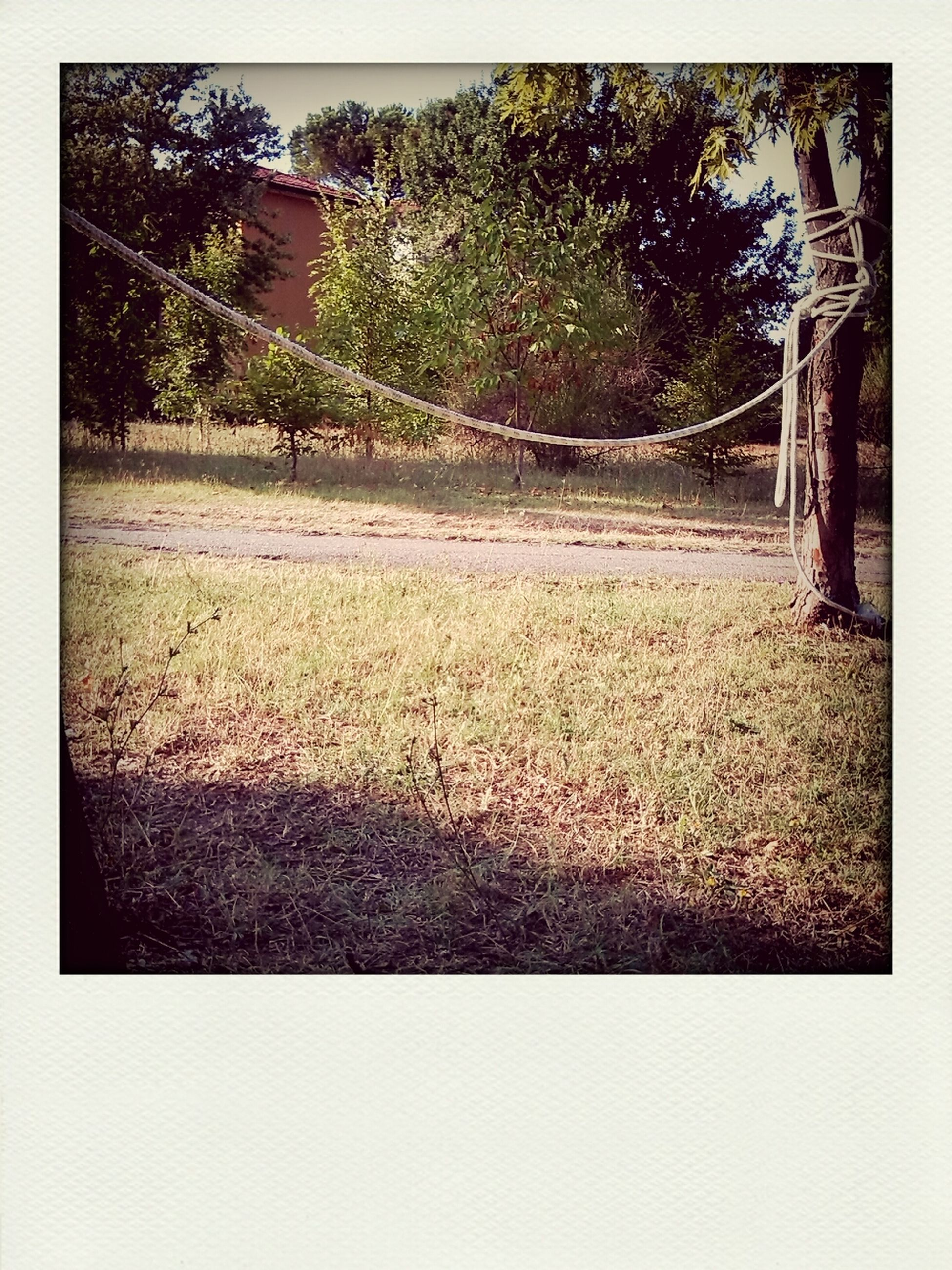 transfer print, tree, auto post production filter, grass, field, growth, tranquility, nature, tranquil scene, park - man made space, landscape, grassy, day, beauty in nature, green color, outdoors, park, plant, scenics, no people