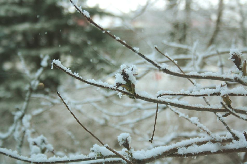 Beautiful stock photos of schneeflocken, Bare Tree, Beauty In Nature, Blizzard, Branch