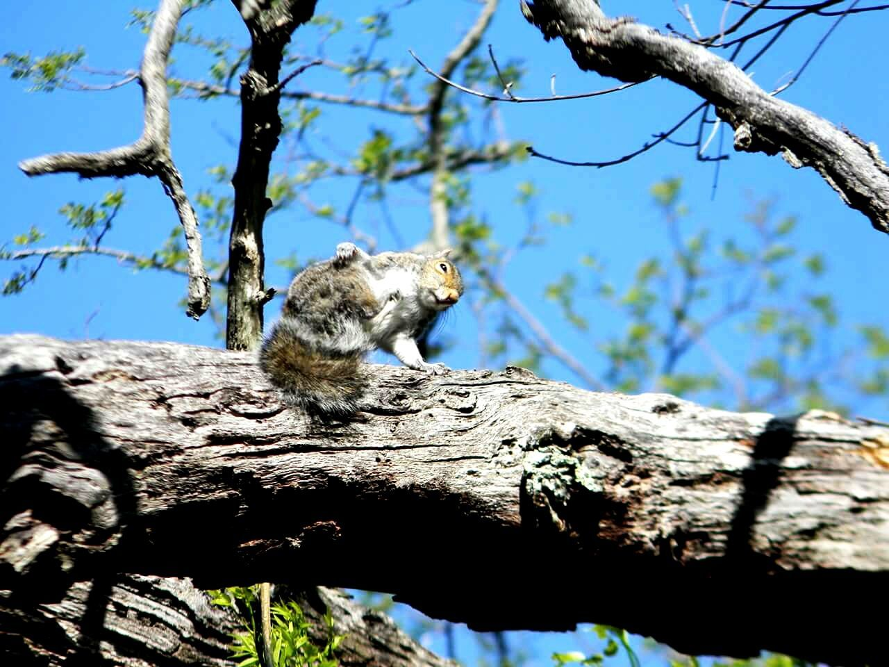 tree, branch, low angle view, animals in the wild, one animal, sunlight, animal wildlife, day, outdoors, animal themes, nature, no people, tree trunk, mammal, sky, blue, beauty in nature, close-up