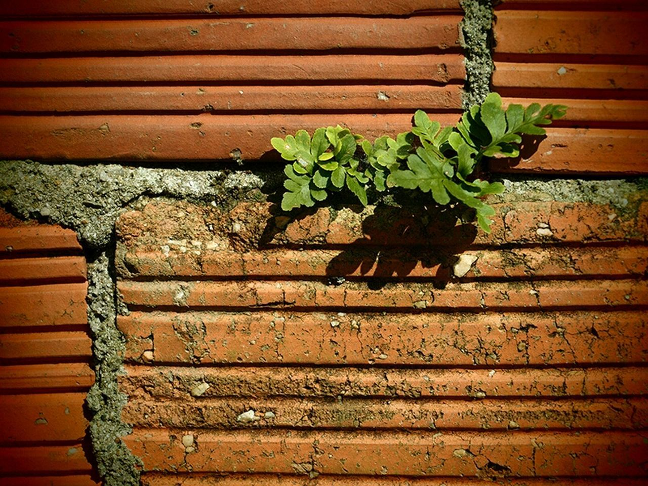 no people, outdoors, corrugated iron, nature, day