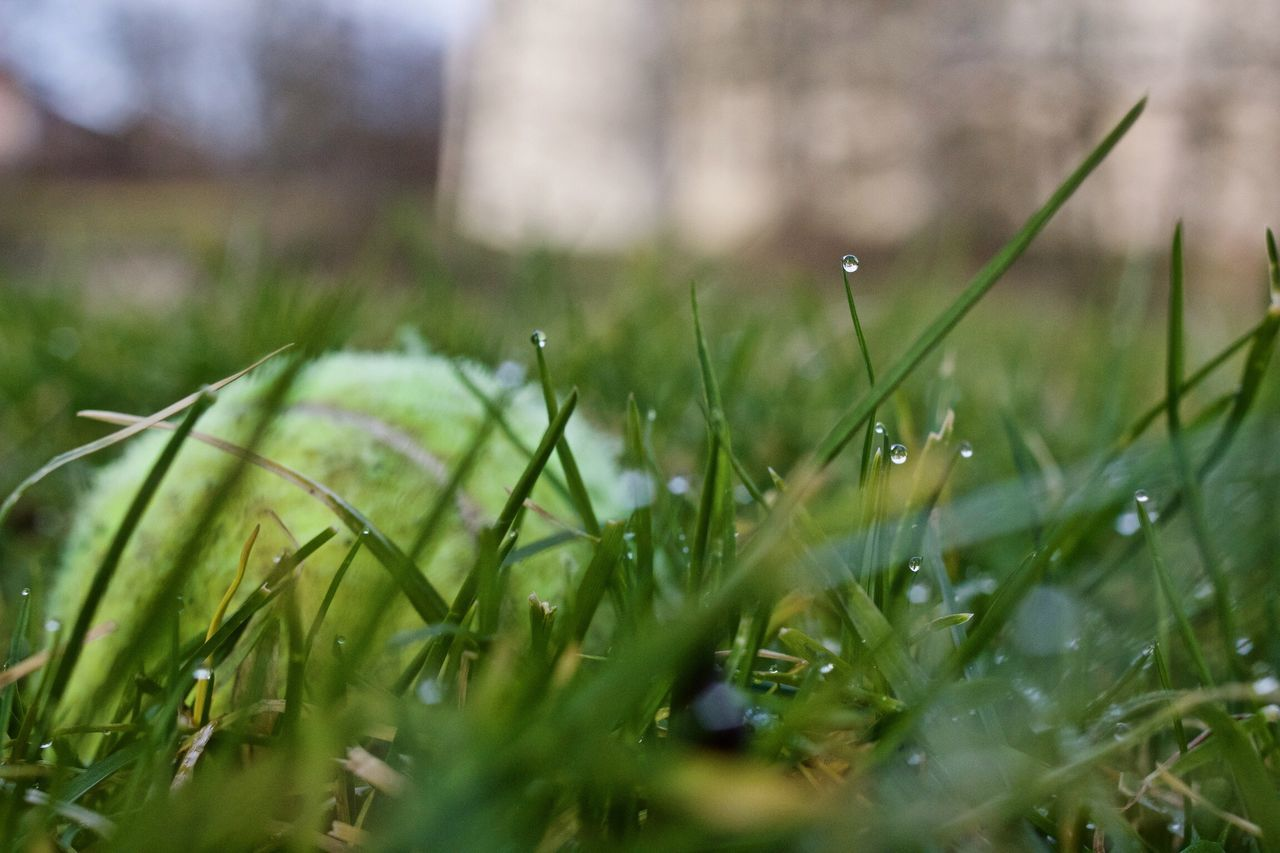 Growth Grass Nature Green Color Close-up Outdoors Day No People Plant Beauty In Nature Freshness Grass Waterdrops Green Color Green Greenery Lawn Near And Far